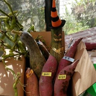 無農薬秋野菜ハロウィンセット、80サイズ箱いっぱい(野菜)