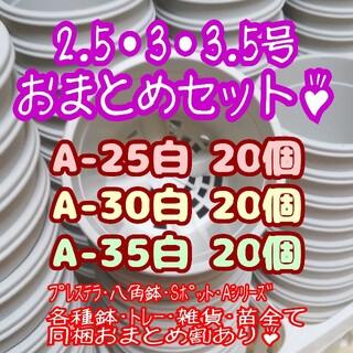 プラ鉢60個おまとめセット♪【2.5号・3号・3.5号鉢各20個】プレステラ多肉(プランター)
