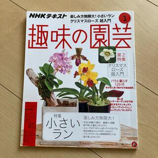NHK 趣味の園芸 2019年 1月 ラン クリスマスローズ