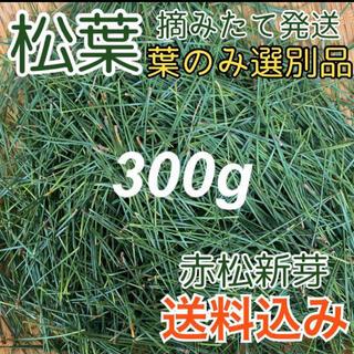 【厳選松葉】松葉茶などに 300g!松茸の育つ産地の葉 健康茶(健康茶)