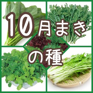 【野菜の種】10月まき 5種 150粒 種子(その他)