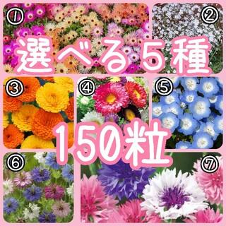 【花の種】撰べる5種 150粒 種子(その他)