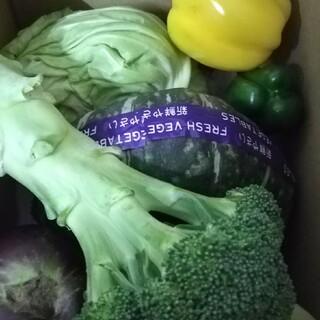 北海道 野菜詰め合わせセット 無農薬 60サイズ(野菜)