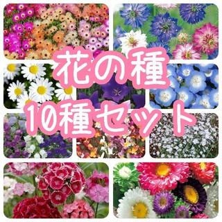 【花の種】10種 セット 種子(その他)