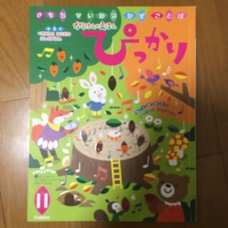 ガッケン(学研)のぴっかり 11月(絵本/児童書)