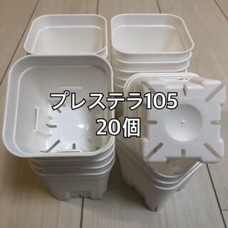 プレステラ105 白 20個(プランター)