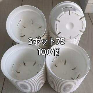 Sポット75 白 100個(プランター)
