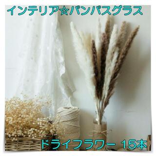 インテリア☆パンパスグラス ドライフラワー 15本 おうち時間 華やかに 花材(ドライフラワー)