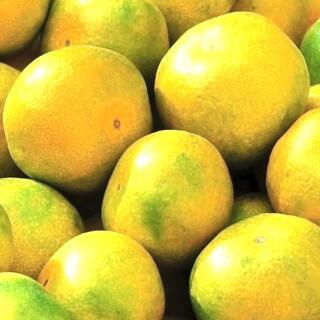 【山北みかん 秀品 3キロ 早生】黄~黄青みかん 温州みかん フルーツ果物蜜柑(フルーツ)