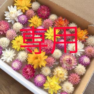 貝細工&千日紅ドライフラワー(ドライフラワー)