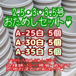 プラ鉢おためしセット♪【2.5号・3号・3.5号鉢 各5個】プレステラ 多肉植物(プランター)