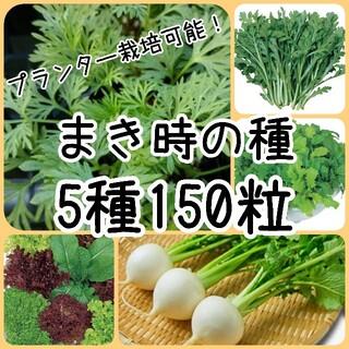 【野菜の種】まきどき 5種 150粒 種子(その他)