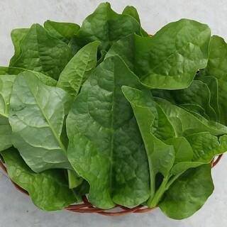 ツルムラサキ【無農薬】野菜(野菜)