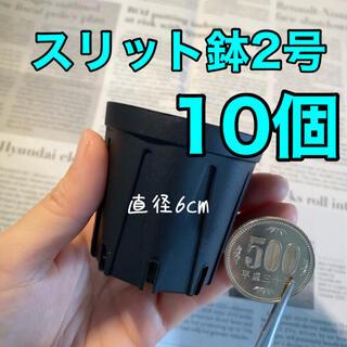 スリット鉢2号 直径6センチ 10個(プランター)
