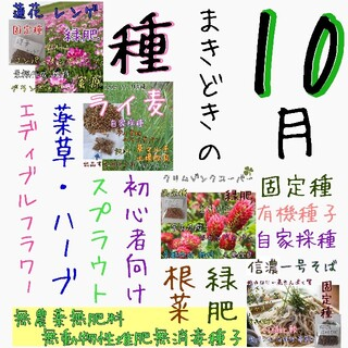 小春日和様専用(野菜)
