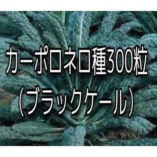 カーポロネロの種300粒(その他)