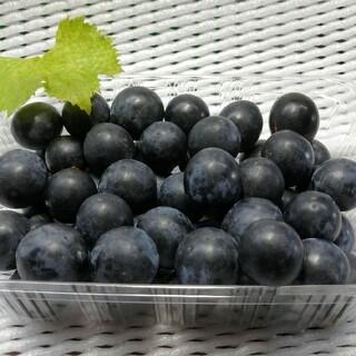 長野県産 ブラックビート 粒 約800g(フルーツ)