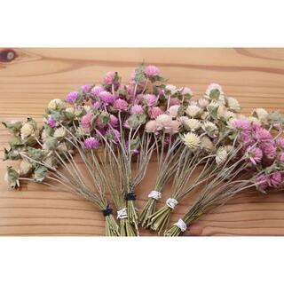 千日紅 4色120本ピンク&白(短い茎&葉付き)(ドライフラワー)