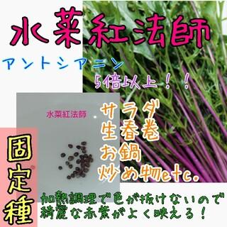 水菜紅法師 固定種 家庭菜園 プランター 野菜の種 種子 種(野菜)