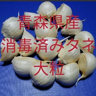 タネにんにく✤大粒✤30粒✤ニンニク(野菜)