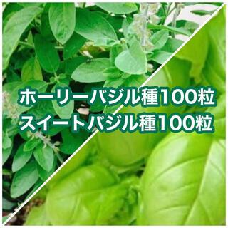 ホーリーバジルの種100粒とスイートバジル種100粒(その他)