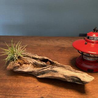 味のある穴あき 流木…天然物、インテリア、オブジェ