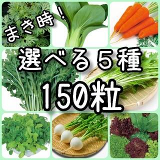 【野菜の種】5種 150粒 種子(その他)