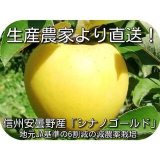 信州安曇野「シナノゴールド」1.5キロ家庭用 減農薬・除草剤不使用の安心りんご(フルーツ)