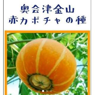 奥会津 金山赤カボチャの種 【15粒】(野菜)