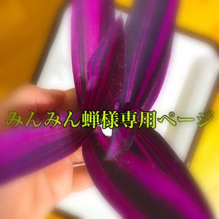 斑入り  ムラサキゴテン    カット  2本(その他)