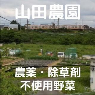 【特注品…K様】農薬・除草剤不使用ハロウィンスイート(60サイズ箱)(野菜)
