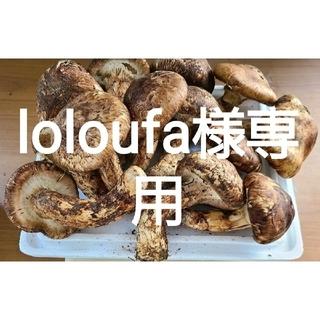 中国産 【天然 つぼみ、半開き 松茸 1kg】 5~12本(野菜)