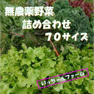 秋を感じる野菜セット 秋野菜の詰め合わせ 70サイズ 10月16日〜17日の発送(野菜)