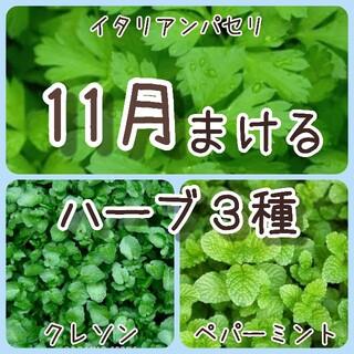【ハーブの種】11月まき 3種 150粒 種子(その他)