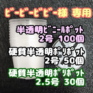 半透明ビニールポット 2号 6cm 100個 プラ鉢ポリポット多肉植物プレステラ(プランター)