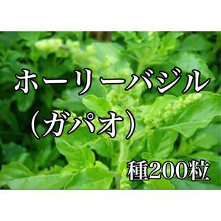 ホーリーバジル(ガパオ)の種200粒(プランター)