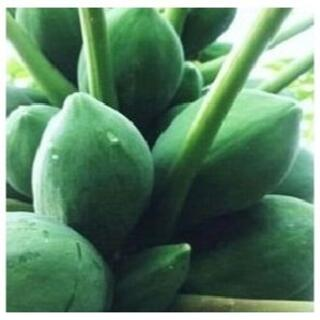 R1010「青パパイヤ 3キロ」島野菜 タイアジア食材 グリーンパパイヤ(野菜)