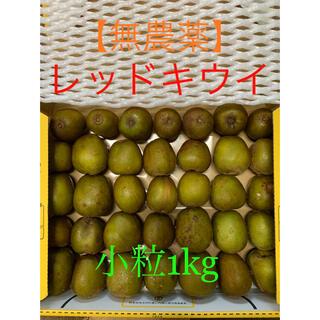 【無農薬】レインボーレッドキウイ☆小粒訳あり約1kg★未完熟品(フルーツ)
