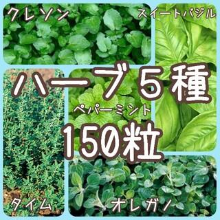 【ハーブの種】5種 150粒 種子(その他)
