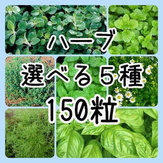 【ハーブの種】選べる5種 150粒 種子(その他)