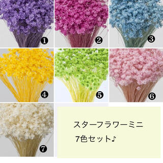 スターフラワーミニ7色セット(140本)☆(プリザーブドフラワー)