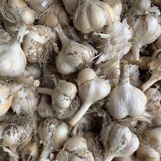 青森県産にんにく5kg M ニンニク5キロ 福地ホワイト6片種 訳あり①(野菜)