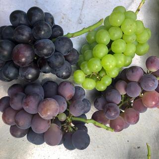 専用 岡山県産ぶどう 紫系と緑系(フルーツ)