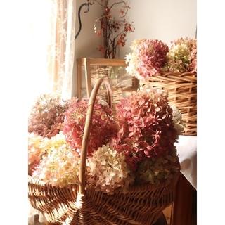 秋の七草藤袴が香る秋色水無月紫陽花リース。ドライフラワーリース。秋支度(リース)