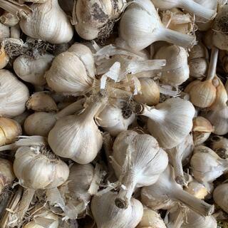 青森県産にんにく10kg L ニンニク10キロ 福地ホワイト6片種 訳あり①(野菜)