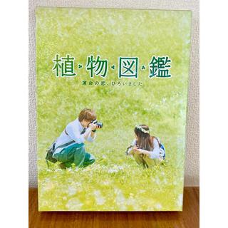 サンダイメジェイソウルブラザーズ(三代目 J Soul Brothers)の植物図鑑 運命の恋ひろいました DVD(日本映画)