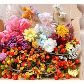ツルウメモドキの実 プリザーブドフラワー花材 ドライフラワー(ドライフラワー)