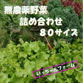 秋を感じる野菜セット 秋野菜の詰め合わせ 80サイズ 10月16日〜17日の発送(野菜)
