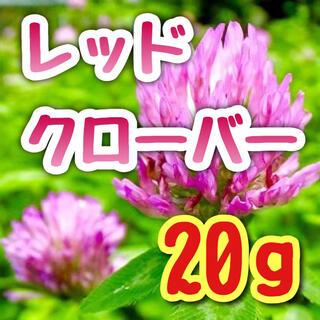 【隠れた人気ハーブ!】アカクローバー☆レッドクローバー 種 20g4000粒!(プランター)