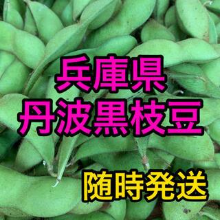 今が旬! 丹波黒枝豆 約500g(野菜)